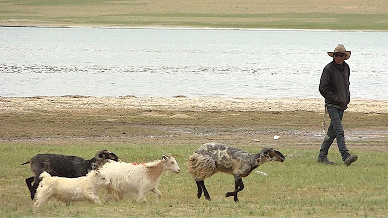 Tibetan Nomads in Exile - Tsering Wangmo