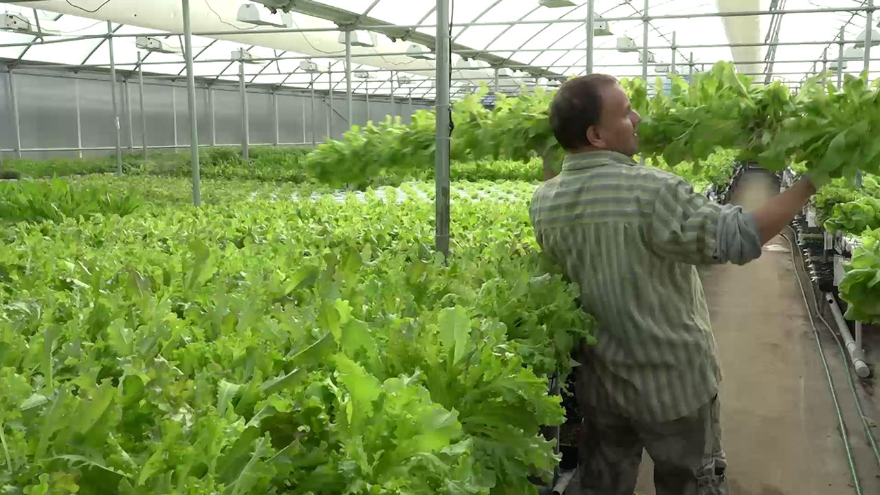 Person in a greenhouse